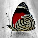 """Set for creating a picture using the technique of diamond mosaic """"Bright butterfly"""""""
